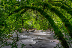 Natural Arch (Gary Angus) Tags: dunkeld perthshire scotland hermitage braan river
