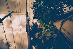 2016156 (gwagwa) Tags: flower sky green street japan nikkor 20mm f28s
