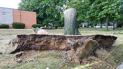 trees down at Lutheran High School East 05 - 2016-08-11 (Tim Evanson) Tags: clevelandheightsohio clevelandheightsmicroburst weather trees myhouse