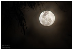 Gothic Mystique (juliewilliams11) Tags: moon tree photoborder canon newsouthwales australia