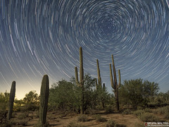sonora desert star trails (WildernessShots.com) Tags: startrails night tucson arizona sonoradesert saguaro cactus