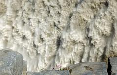 I will survive! (marko.erman) Tags: dettifoss iceland islande fall waterfall vatnajkull national park sony power powerfull grandiose impressive gigantic rainbow extrieur flower delicate