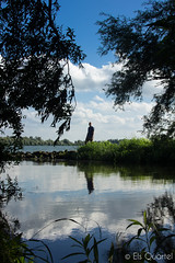 Reflection (Els Quartel) Tags: nature reflection water island outdoor lake biesbosch