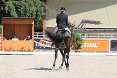 IMG_7555 (dreiwn) Tags: dressage dressur dressuur pferd reitturnier turnierreiten pferdesport horse horseback horseriding equestrian reitverein dressurprfung kandare doublebridle reiten pferde reitplatz ridingarena