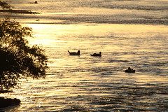 Late Afternoon Tubing (dsgetch) Tags: autzen autzenfootbridge willametteriver willamette river tubing rafting summer sunset