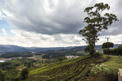 Tea gardens (P K Gupta VNS) Tags: teagarden teaplantation ooty tamilnadu landscape