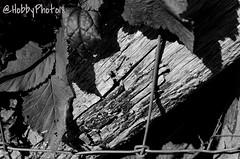 Ombrage (hobbyphoto18) Tags: haiku ombre shadow feuilles leaves bois wood noiretblanc nb blackandwhite bw pentax pentaxk50 k50 extrieur