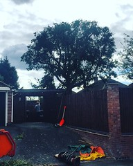 "Small reduction on a eucalyptus that's been heavily pruned in the past #wardenstreecare working for Stump Removal Services. <a style=""margin-left:10px; font-size:0.8em;"" href=""http://www.flickr.com/photos/137723818@N08/29559651315/"" target=""_blank"">@flickr</a>"