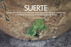 Suerte (Ali Llop) Tags: clover irish leaf luck green ireland fortune patrick sign holiday symbol lieves st saint petals traditional nostalgia macro brown wood tradition good plant lucky country wooden vintage background happy rustic oldflowerpot