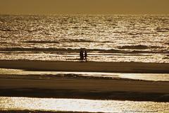 Belgian coast (Natali Antonovich) Tags: belgiancoast wenduine northsea sea seasideresort seashore seaboard seaside romanticism parallels nature water silhouette portrait relaxation reflection beach lifestyle walking walk