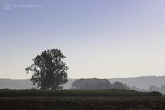 misty morning (photos4dreams) Tags: thursdaymorningwalkp4d feld wald wiese wiesen forest tree trees sky wood woods branch zweig baum nature natur photos4dreams p4d photos4dreamz walk spaziergang