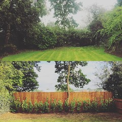 "Out with the old and in with the new! We removed the old ivy clad mixed hedge and ground the stumps out. @wardensfencing then installed new fencing all around the garden, followed by us replanting a laurel hedge 😃 #wardenstreecare <a style=""margin-left:10px; font-size:0.8em;"" href=""http://www.flickr.com/photos/137723818@N08/29752958801/"" target=""_blank"">@flickr</a>"