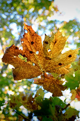 2012 10 06_d7000_0091 (swedgatch) Tags: autumn color art fall nature colors beautiful beauty by photography photo nikon photographer angle artistic photos sweden perspective sigma photographs photograph capture 1770mm d7000 swedgatch
