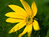 (THX4711) Tags: flower macro nature colors grass flora dof blossom natureza visualart naturesfinest ruby3 coth supershot abigfave diamondclassphotographer flickrdiamond mimamorflowers bewiahn