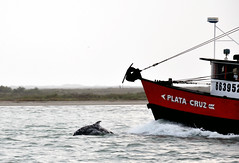 The Chase (Anna Grove) Tags: ocean water bay boat jump fishing texas dolphin chase padreisland southpadre