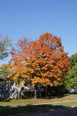 DSC02327 (tomcomjr) Tags: blue autumn trees red green fall yellow day sony sunny bluesky a33 kansas alpha slt pittsburg clearskies sonyalphadslr pittsburgks sal1855