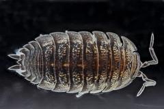 Anglų lietuvių žodynas. Žodis malacostracan crustacean reiškia malacostracan vėžiagyvių lietuviškai.