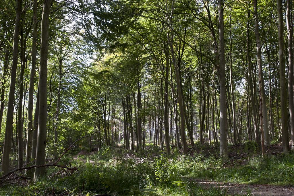 Hemsted Forest Car Park