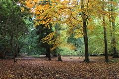 Autumn colour (Jonathan Proud) Tags: autumn moorlands yorkshirewildlifetrust ywt