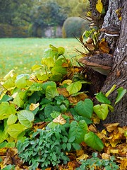 Aston Rowant, Oxfordshire (Oxfordshire Churches) Tags: uk england unitedkingdom autumnleaves panasonic oxfordshire villagegreen bracketfungi astonrowant shelffungi johnward lumixgh2