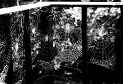 Spiderwebs (lindscatt) Tags: blackandwhite bw white black garden spider spiders web spiderweb rails railing blacknwhite spiderwebs webs webbed pregamesweepwinner