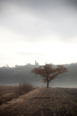 Mist behind the tree (Dylan Farrow) Tags: morning winter mist france cold tree field website valley added sentous