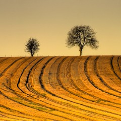 Simplicity (Eric Goncalves (lots of catching up to do!!)) Tags: autumn trees gloucestershire autumnal mfcc thegalaxy blinkagain galleryoffantasticshots rememberthatmomentlevel4 rememberthatmomentlevel1 rememberthatmomentlevel2 rememberthatmomentlevel3 rememberthatmomentlevel5 rememberthatmomentlevel6
