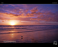Alone Again (tomraven) Tags: alone solitude tomraven beach sky sea surf sunset island reflections seagull gull dancinggull degull aravenimage otakibeach newzealand gullalone q22010 q42012 rememberthatmomentlevel1 rememberthatmomentlevel2 fbdg rememberthatmomentlevel3
