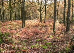 Autumn woods (GillWilson) Tags: