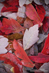 Fallen Leaves (DMeadows) Tags: autumn trees red macro castle water leaves woodland scotland droplets leaf drops dew autumnal balloch davidmeadows dmeadows davidameadows dameadows yahoo:yourpictures=myautumn yahoo:yourpictures=yourbestphotoof2012