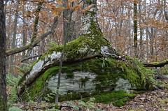 (Julia Manzerova) Tags: mountains tree nature rock outdoors hiking boulder glacier upstatenewyork newyorkstate wilderness thecatskills drybrookhike