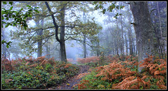 Forest of Dean (Mrs P's Photo Show Thanks for visiting & Comments) Tags: wood autumn forest moss dean