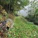 Muniellos: bosque de Moal