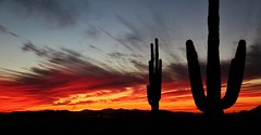 12-29-2012 Sunset5_4626 (Photography Peter101) Tags: sunset arizona cactus nature sunrise canon landscape