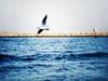 طائر النورس Gull (Ahmed Fareed 2010) Tags: blue sea bird beach fly flying gull شاطئ بحر نورس ازرق طائر النورس flickrandroidapp:filter=none