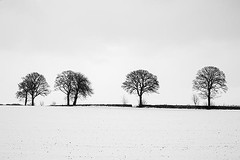 Calm Winter Scene - Cool Line of Trees in Snow Covered Scottish Field (Magdalen Green Photography) Tags: winter snow cold tree tayside scottishweather 0053 wintryscene scottishwinter calmnaturescene iaingordon calmwinterscene coollineoftrees magdalengreenphotography insnowcoveredscottishfield