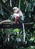 Singapore Zoo-274 (Jon Durman) Tags: animals zoo nikon wildlife april 2012 singaporezoo nikond700 nikon28300mm