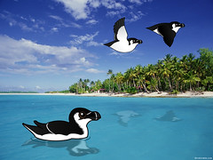 Razorbills in Florida (birdorable) Tags: cute bird funny florida invasion razorbill birdorable