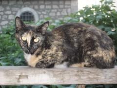Cats_in_Trabzon (2) (Sasha India) Tags: cat turkey chat trkiye tur trkorszg journey gato  macska turquia kedi trabzon
