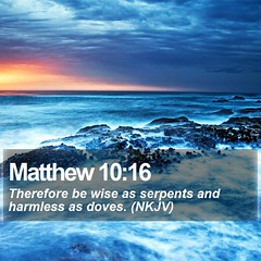 Daily Bible Verse - Matthew 10:16 (daily-bible-verse) Tags: redemption verse dailydev picoftheday
