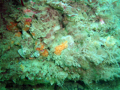 DurlBay 8 (bloomspix) Tags: seasearch underwater englishchannel swanage