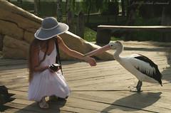 Pairi Daiza (Natali Antonovich) Tags: pairidaiza zoo belgium belgique belgie bird park natalyahrebionka pelicans lifestyle tradition hat hats hatisalwaysfashionable portrait