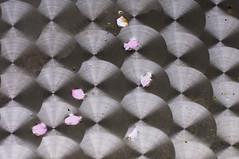 10-04-09 tisch jap kir nah str  strukt 2 dsc01561 (u ki11) Tags: bw bltenblatt rhythmus spiegel strung tisch