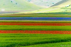 _DSC5343 (Lord_Robe_83) Tags: castelluccio fioritura