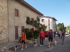 Dog walking (passseggiata con in cane) a Fagagna - agosto 2016 (Passeggiate cinofile in FVG) Tags: dog walking passeggiata con il cane fvg fvglive fagagna friuli venezia giulia