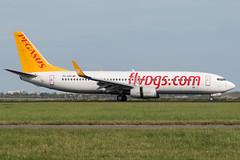 Pegasus / B738 / TC-CPI / EHAM 18 (_Wouter Cooremans) Tags: eham ams amsterdam amsterdamschipholairport amsterdamschiphol schiphol avgeek aviation airplanespotting spotting spotter pegasus b738 tccpi 18