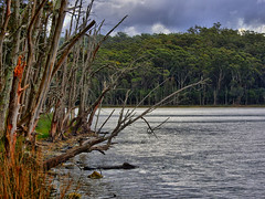Lakeside IV (elphweb) Tags: hdr highdynamicrange lake lakeside waterway trees tree forest bush australia nsw water coastal