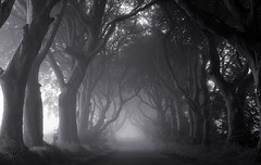 The Spooky Hedges (Glenda Hall) Tags: monochrome bw thedarkhedges gameofthrones hbo august 2015 earlymorning mist spooky trees road ballymoney antrim nothern ireland ulster northernireland uk glendahall canon canon60d 41mm gracehill bregaghroad shadows branches moviescene hboseriesgameofthrones famous landmark thekingsroad blackandwhite landscape fog foggy misty creepy glenda