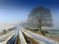 An icy track at Farliegh Wallop. (Beardy Vulcan) Tags: winter england mist cold tree ice weather fog rural freezingfog frost track day path freezing hampshire hedge february icy 2012 basingstoke brassmonkeys farleighwallop farlieghwallop