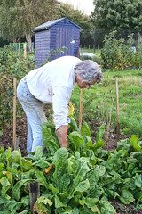 Working on the allotment (larigan.) Tags: flowers autumn man fall vegetables gardening digging shed working lifestyle hobby recreation activity allotment planting pastime healthyeating hoeing healthyliving modelreleased homeproduce larigan phamilton activeretirement gettyimageswants licensedwithgettyimages